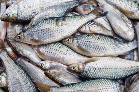Fresh fish in market Stock Photo - 14215474