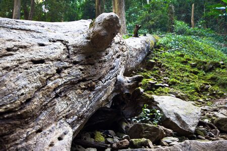 old log in forest