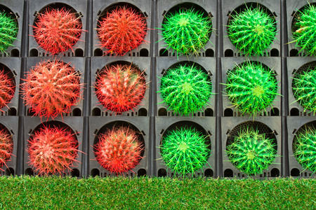 Colorful of cactus decorate in garden Stock Photo