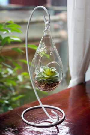 Miniature cactus succulent plant in a glass vase , decorate in household