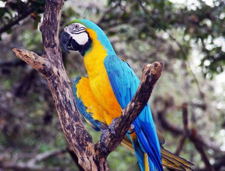 a blue and gold macaw sitting on a branch