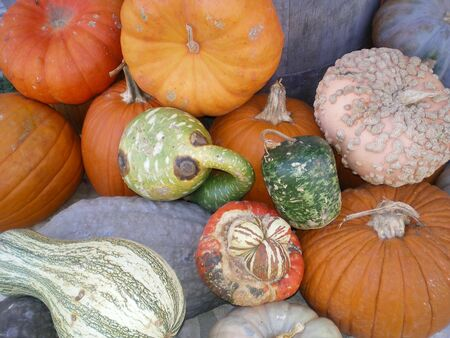 a mixture of pumpkins and gords all together