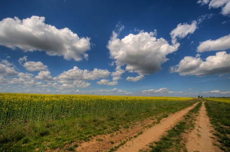 Agricultural field under the blue sky photo
