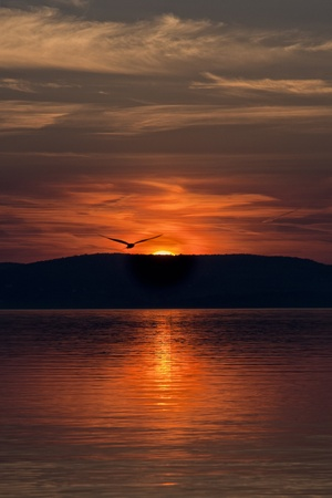 Red sunset, lake and gull