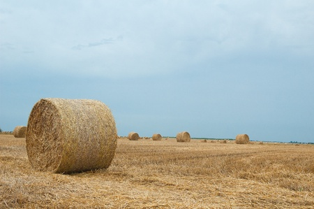 Straw bales on farmland with blue sky Stock Photo - 12857648