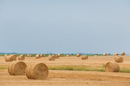 Straw bales on farmland with blue sky Stock Photo - 12857644