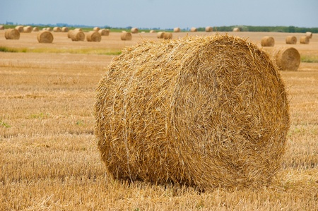 Straw bales on farmland with blue sky Stock Photo - 12857651
