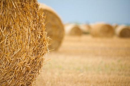 Straw bales on farmland with blue sky Stock Photo - 12857645