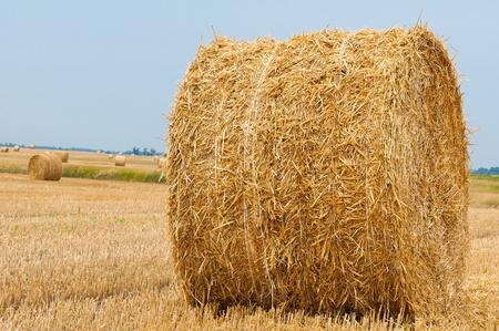 Straw bales on farmland with blue sky Stock Photo - 12857650