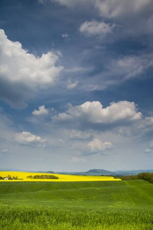 Landscape with blossoming colza and sky with blue cloouds Stock Photo - 16529426