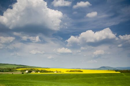 Landscape with blossoming colza and sky with blue cloouds Stock Photo - 16529427