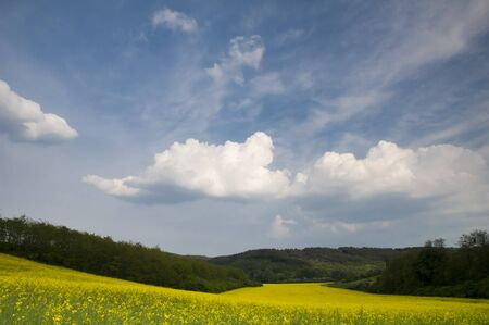Landscape with blossoming colza and sky with blue cloouds Stock Photo - 16529425