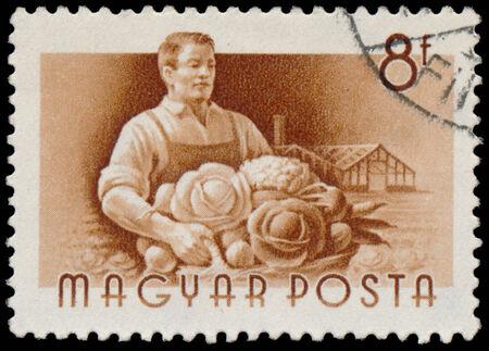 circa: HUNGARY - CIRCA 1955: A stamp printed in Hungary, shows Garpenter, series occupations, circa 1955
