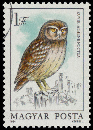 athene: HUNGARY - CIRCA 1984: stamp shows image of a Little Owl, with the inscription Athene noctua, from the series Owls, circa 1984 Stock Photo