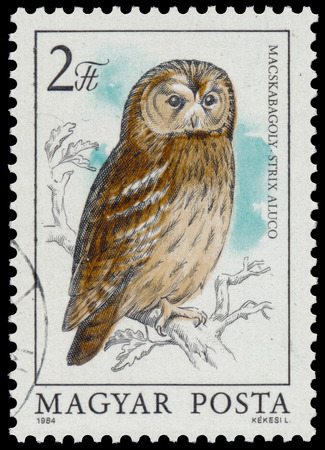 tawny owl: HUNGARY - CIRCA 1984: stamp shows image of a Tawny Owl, with the inscription Strix aluco, from the series Owls, circa 1984 Stock Photo
