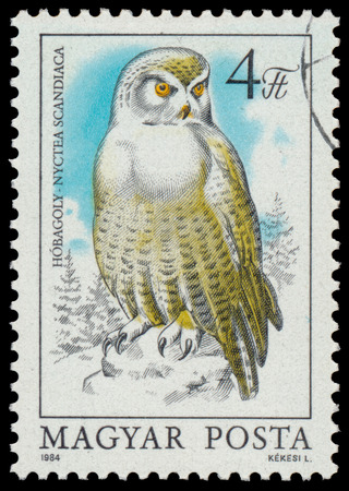 HUNGARY - CIRCA 1984: stamp shows image of a Snowy Owl, with the inscription