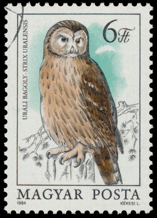 HUNGARY - CIRCA 1984: stamp shows image of an Ural Owl with the inscription Strix uralensis, from the series Owls, circa 1984