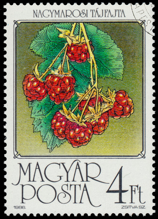 magyar: HUNGARY - CIRCA 1986: stamp printed by Hungary, shows Raspberries, series is devoted to fruits, circa 1986
