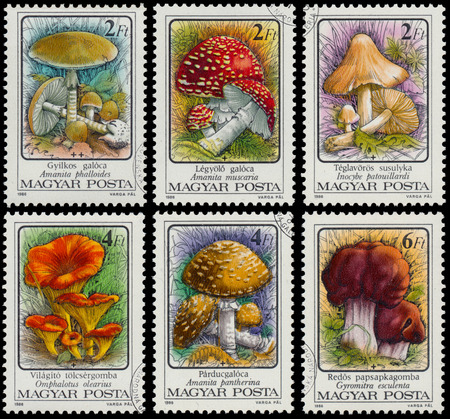 HUNGARY - CIRCA 1986: A stamp printed in Hungary shows Poisonous mushrooms Death cap - Amanita phalloides, circa 1986