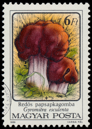 HUNGARY - CIRCA 1986: A stamp printed in Hungary shows Poisonous mushrooms False morel - Gyromitra esculenta, circa 1986