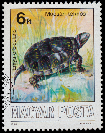 emys: HUNGARY - CIRCA 1986: A stamp printed by Hungary shows Protected Animals, European pond turtle - Emys orbicularis, circa 1986 Editorial