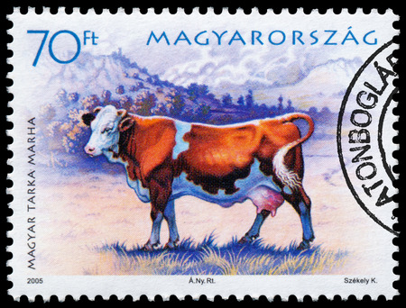 circa: HUNGARY - CIRCA 2005: A Stamp printed in Hungary shows cow - Bos primigenius taurus, series farm animals, circa 2005