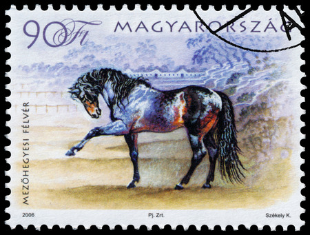 philatelic: HUNGARY - CIRCA 2006: A stamp printed in Hungary shows hungarian horse, circa 2006