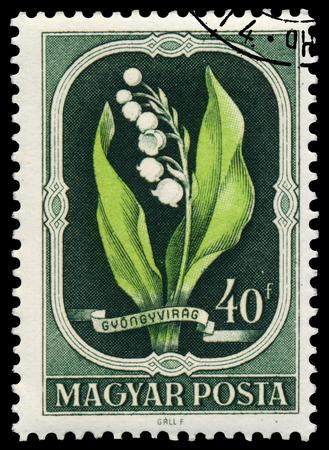 majalis: HUNGARY - CIRCA 1951: Stamp printed in Hungary shows Lily of the Valley - Convallaria majalis, circa 1951