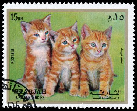 SHARJAH AND DEPENDENCIES, UAE - CIRCA 1972: Stamps printed in Sharjah and Dependencies (United Arab Emirates) shows kittens, circa 1972