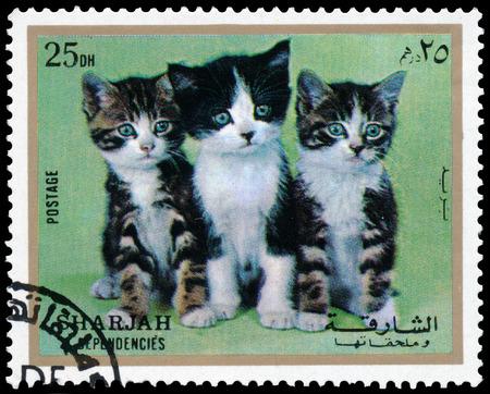 SHARJAH AND DEPENDENCIES, UAE - CIRCA 1972: Stamps printed in Sharjah and Dependencies (United Arab Emirates) shows European kittens, circa 1972 報道画像