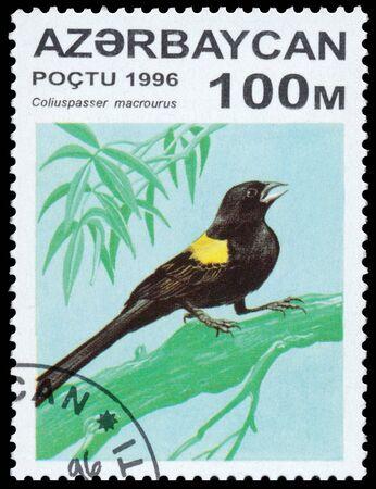 circa: AZERBAIJAN - CIRCA 1996: a stamp printed in Azerbaijan shows Coliuspasser macrourus