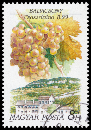 riesling: HUNGARY - CIRCA 1990: a stamp printed in Hungary shows Italian Riesling grapes and landscape of Badacsony Editorial