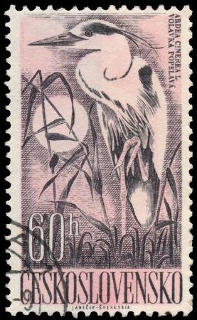 czechoslovakia: CZECHOSLOVAKIA - CIRCA 1960: a stamp printed by Czechoslovakia shows grey heron - ardea cinereal