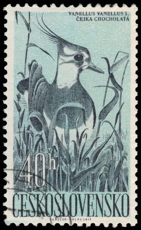 czechoslovakia: CZECHOSLOVAKIA - CIRCA 1960: a stamp printed by Czechoslovakia shows Lapwing