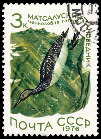 RUSSIA - CIRCA 1976: a stamp printed in Russia shows bird Black-throated Loon