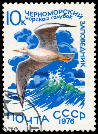 RUSSIA - CIRCA 1976: a stamp printed in Russia shows bird Slender-billed Gull Sajtókép