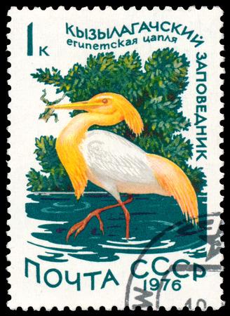 RUSSIA - CIRCA 1976: a stamp printed in Russia shows bird Cattle Egret