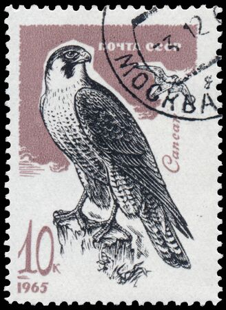 USSR - CIRCA 1965: a stamp printed in the USSR shows peregrine falcon Sajtókép