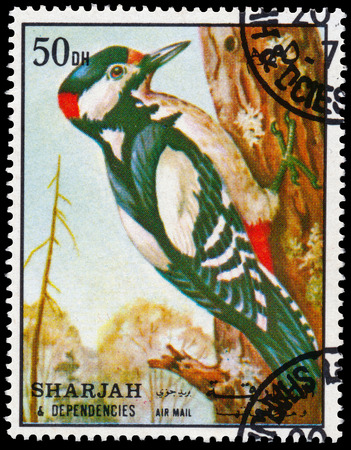 BUDAPEST, HUNGARY - 02 NOVEMBER 2015: a stamp printed in Sharjah shows great spotted woodpecker, circa 1972