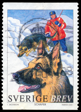 circa: BUDAPEST, HUNGARY - 21 february 2016: a stamp printed in the Sweden shows German shepherd, circa 2001