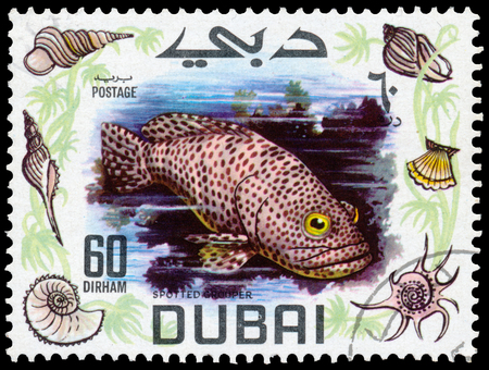 BUDAPEST, HUNGARY - 01 march 2016: a stamp printed in the Dubai shows shows Spotted Grouper fish - Cephalopholis argus, circa 1969