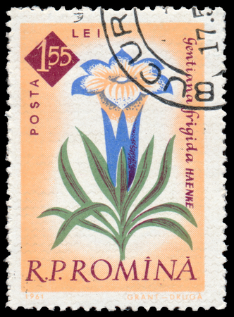 gentian flower: BUDAPEST, HUNGARY - 29 february 2016: a stamp printed in Romania Shows flower Gentian Gentiana frigida, circa 1961 Editorial