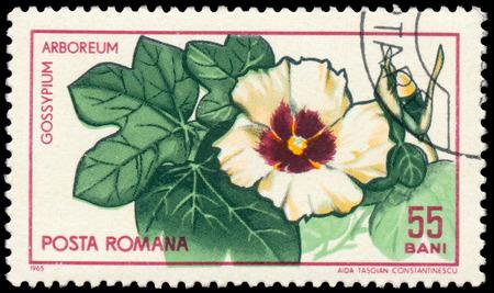 BUDAPEST, HUNGARY - 29 february 2016: a stamp printed in Romania Shows Cotton Tree, Gossypium arboreum, circa 1965 Sajtókép