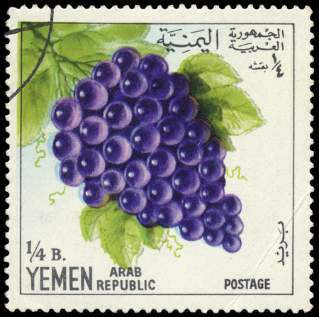BUDAPEST, HUNGARY - 29 february 2016: a stamp printed in the Yemen shows blue grape, circa 1967