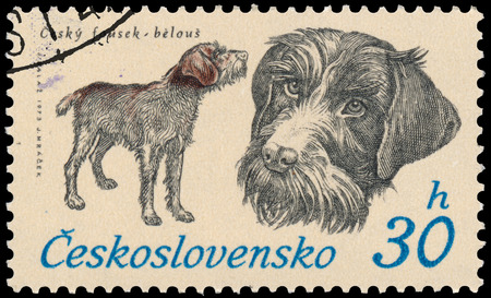 whisker: BUDAPEST, HUNGARY - 12 march 2016:  a stamp printed in Czechoslovakia shows Czech Whisker, circa 1973 Editorial