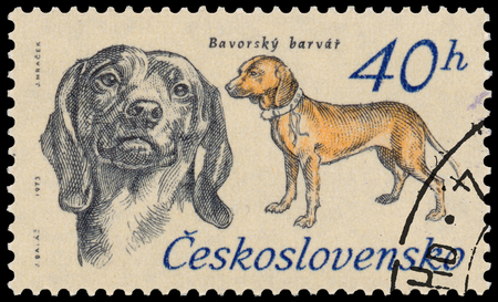 bloodhound: BUDAPEST, HUNGARY - 12 march 2016:  a stamp printed in Czechoslovakia shows Bavarian Mountain Bloodhound, circa 1973