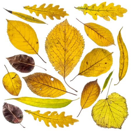 Collection of autumn leaves on white background Illustration