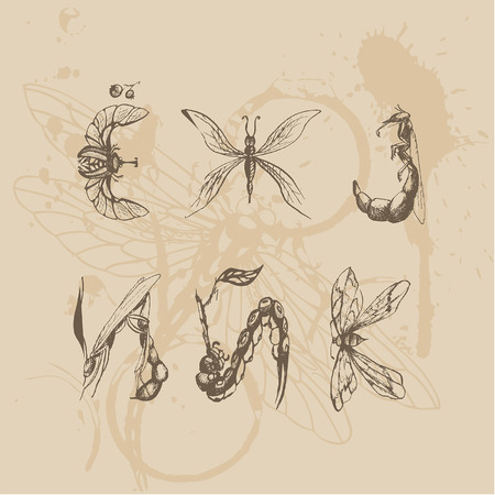 font Insects in the form of modified spiders flies and butterflies, changed, cookie spiders, flies, butterflies, grasshoppers in the form of letters for the alphabet
