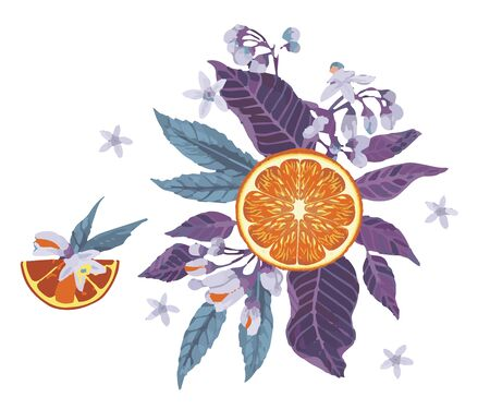 citrus with herbal ingredients. Hand drawn vector illustration with herbal illustrations. Template for print, fabric, wallpaper cover and box design.