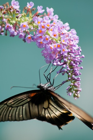 Tropical butterfly on a flower close-up Stock Photo - 18437965